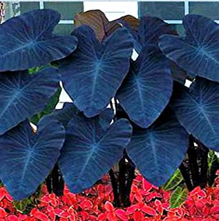 Best plant seed model Reviews