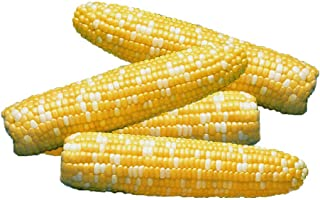 Park Seed Serendipity Triplesweet Hybrid Corn Seeds