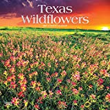 Texas Wildflowers 2021 12 x 12 Inch Monthly Square Wall Calendar with Foil Stamped Cover, USA United States of America Southwest State Nature