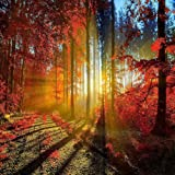 GladsBuy Sunny Forest 6' x 6' Computer Printed Photography Backdrop Forest Theme Background ZJZ-931