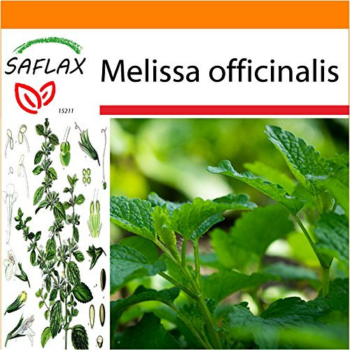 SAFLAX - Jardin dans le sac - Mélisse officinale - 150 graines - Melissa officinalis