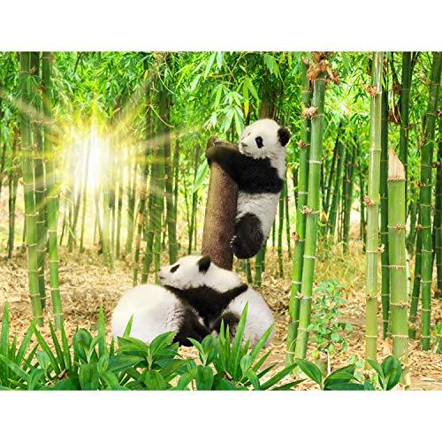 Fototapete Panda Tiere Bambus 352 x 250 cm Vlies Tapeten Wandtapete XXL Moderne Wanddeko Wohnzimmer Schlafzimmer Büro Flur Grün Schwarz Weiss 9332011a