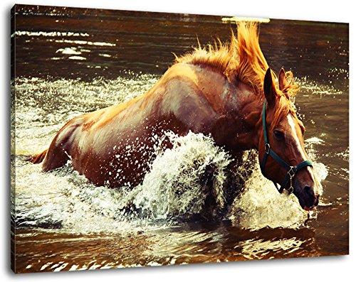 Paard in het formaat 80 x 60 cm water op canvas, XXL grote afbeelding met de stok, frame, wandlijst met frame