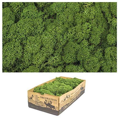 1 Kiste Echtes Moos - Natur Dekomoos zum basteln in verschiedenen frischen Sorten - DIY - Islandmoos, Plattenmoos, Bollenmoos, Hügelmoos Sphagnum Moos (1 x Island Moos grün)