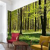 Fotomural - Top fondo de pantalla Bosque - Mural apaisado papel pintado fotomurales murales pared papel para pared foto 3D mural pared barato decorativo Dimension: 225 x 336 cm; Motivo: claro