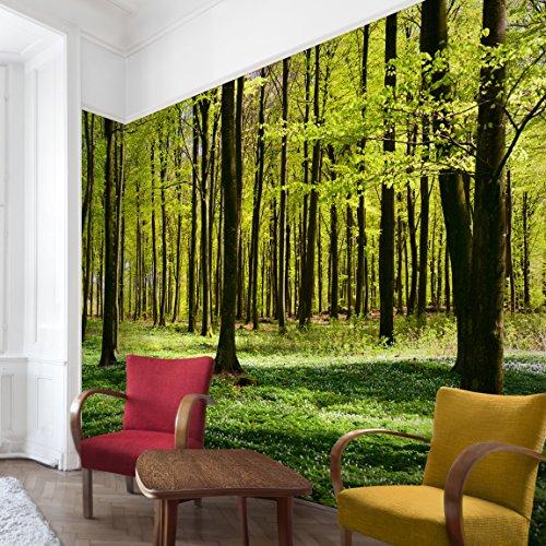 Apalis Waldtapete Vliestapete Waldwiese Fototapete Wald Breit | Vlies Tapete Wandtapete Wandbild Foto 3D Fototapete für Schlafzimmer Wohnzimmer Küche | mehrfarbig, 94850