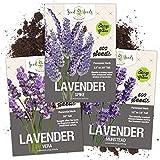 Seed Needs, Lavender Herb Seed Packet Collection (3 Varieties of...