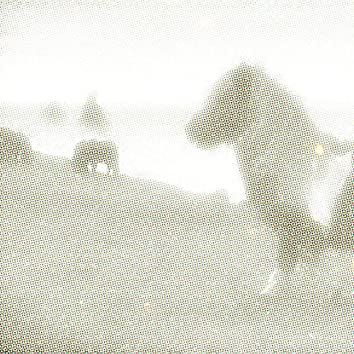 Groovy Donkey - Single