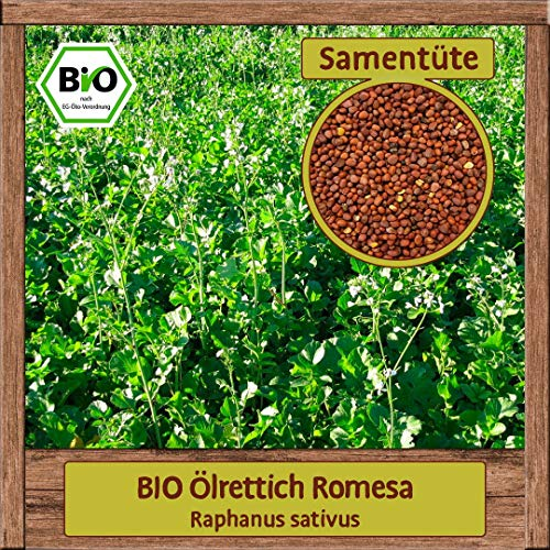 Samenliebe 8g BIO Ölrettich Samen Romesa Raphanus sativus Gründüngung einjährig Saatgut für ca. 4m²