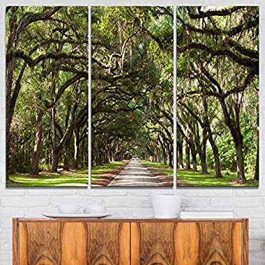 Design Art Live Oak Tunnel Photography on Canvas Art Wall Photgraphy Artwork Print