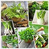 Raccolta di semi di erbe aromatiche 15 pacchetti individuali delle nostre erbe culinarie più popolari (15)
