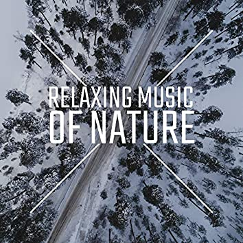 Relaxing Music of Nature: 2020 Ambient Music with Nature Sounds (Ocean, Rain and Many More) Composed for Giving You a Perfect Relax, Rest and Calm Down
