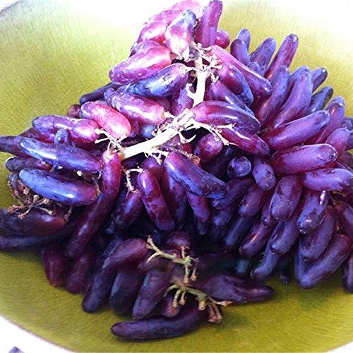 KINGDUO 50 Pcs/Paquet Doigt Pépins De Raisin Raisins De Délicieux Fruits en Pot Plant des Graines pour La Maison Et Jardin-Violet