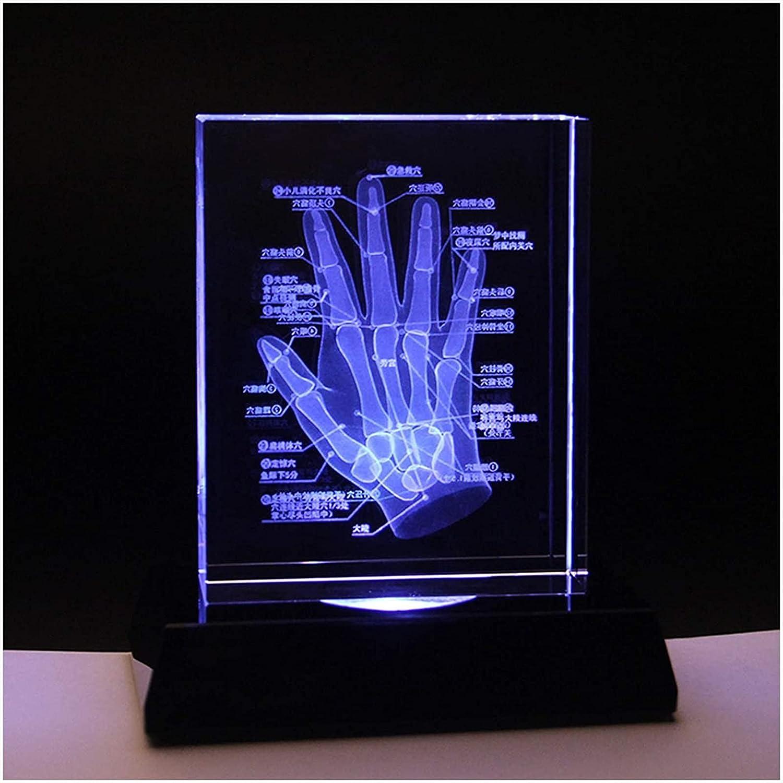 ZAMAX Study Model Memphis Mall 3D San Antonio Mall Human Skeleton Hand Sk - Crystal