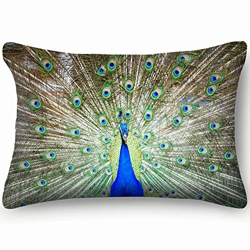 best & Peacock Spread tailfeathers Animals Wildlife Animal Nature Skin Cool Super Soft and Luxury Pillow Cases Covers Sofa Bed Throw Pillow Cover with Envelope Closure 2030 inch