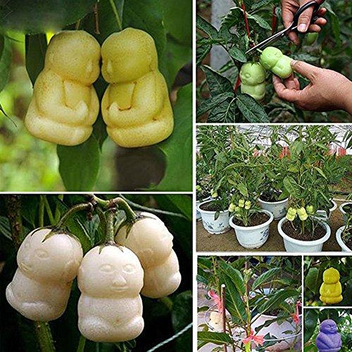 Zhouba Ginseng Obstsamen für Gartenpflanzen, 10 Stück/Packung seltene köstliche Baby-Ginseng-Frucht-Samen für Familie und Garten