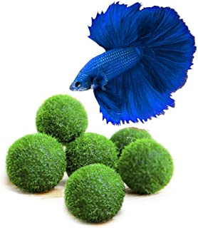 Luffy Marimo Moss Balls, Aquarium Decor or a Perfect Heirloom Gift, Symbolize Eternal Love, Good Luck Charm, Loved by Aquarium Pets