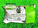 Fescue Grass Seeds - Best Reviews Guide