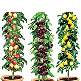 Column Fruit Trees (Set of 3)   ...