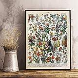 GGLLBL - Póster de seta educativa, diseño retro de animales de la vida, biología y grabación, pintura de pared, para sala de estar, decoración del hogar, pintura en lienzo (50 x 70 cm)