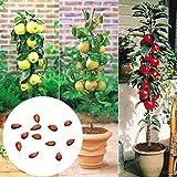 Rosepoem Mini semillas del árbol frutal de Bonsai del jardín semillas del manzano - 60pcs