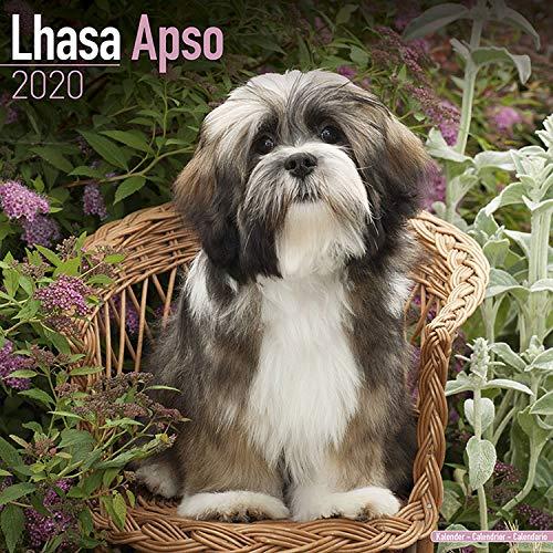 Lhasa Apso Calendar 2020