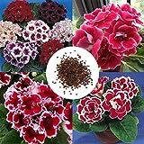 GETSO Samen-Paket: 50Pcs: New Nizza Entzückende Blumen Beautifying Duftende Blüten Gloxinie Samen Lkr8 01