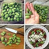 TOPmountain Semi di Albicocca,50 Pezzi deliziosi Semi di Frutta,Facili da Coltivare