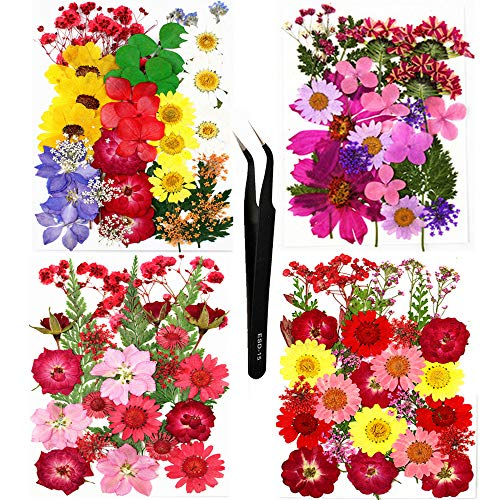 Sieman 114 flores secas naturales prensadas para hacer velas de resina, colgantes, fundas de teléfono móvil, marcos de fotos, bombas de baño (estilo 2/114 unidades)