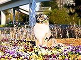 Marlii Hundebürste | Katzen-Bürste | Premium Wohlfühl Unterfell-Bürste für Mittel bis Langhaar | Enthaarungs- & Entfilzungs- Bürste | Massage Hundekamm für gesundes & strahlendes Fell | 100% Marlii-Zufriedenheitsgarantie + Gratis Fellpflege E-Book - 4