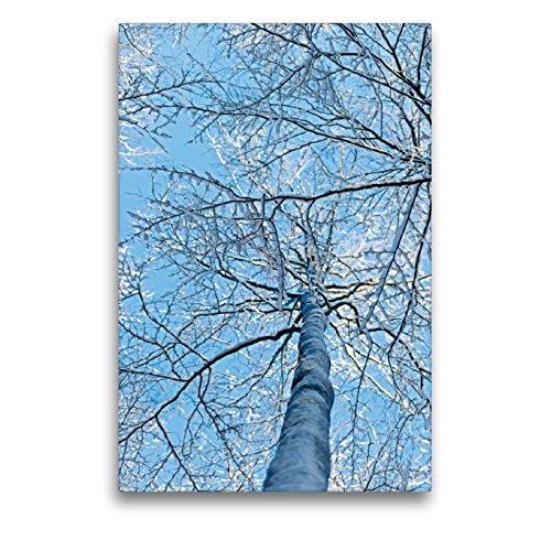 CALVENDO Toile Textile de qualité supérieure de 50 cm x 75 cm - Un Motif du Calendrier des Excursions du Soleil forestier - Décoration Murale, Image sur châssis Nature Toile Murale Motif Nature