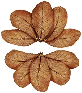 GOLDEN STAR Almond Leaves for Betta, 7-8 Inches, Promotes Breeding, Lowers Your Tank's pH, Decreases Stress in Fish, Shrim...