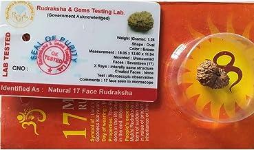 17 Mukhi Certified Rudraksha (Indonesian Java)