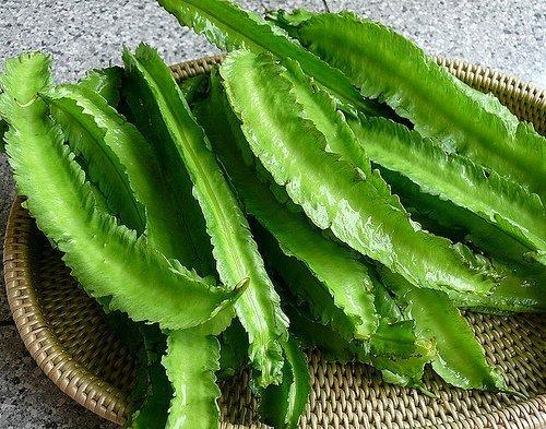 Winged Beans Seeds Unique Vegetables