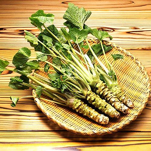 200pcs / lot Semillas wasabi, vegetal de semillas de rábano picante japonés para plantar fácil crecer Bonsai Plantas del jardín de DIY Plantas