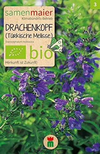 Samen Maier 831 Drachenkopf (türk.Melisse) (Bio-Drachenkopfsamen)