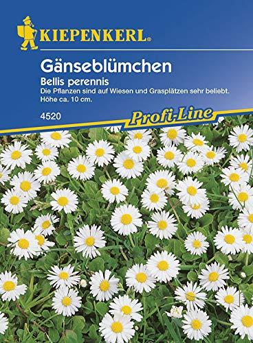 Gänseblümchen Bellis perennis von Kiepenkerl