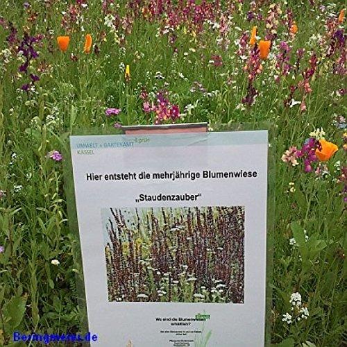 Staudenzauber Mehrjährige Blumenmischung - Blumenwiese für ca. 50 m², ca. 100 Gramm