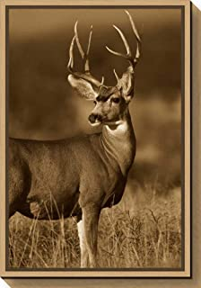 Framed Canvas Wall Art Print Mule Deer Male in Dry Grass North America Sepia by Tim Fitzharris 16.00 x 23.25