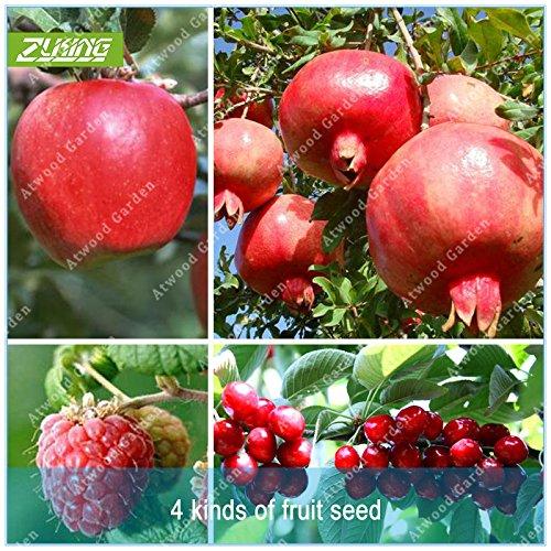 ZLKING 4 Type Fruit Bonsai arbres fruitiers Semences potagères et les graines de fruits délicieux cerise grenade framboise Total 100 + pcs
