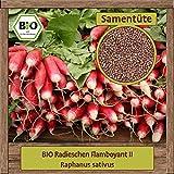 BIO Radieschen Samen Sorte Flamboyant II () Gemüsesamen Radieschen Saatgut