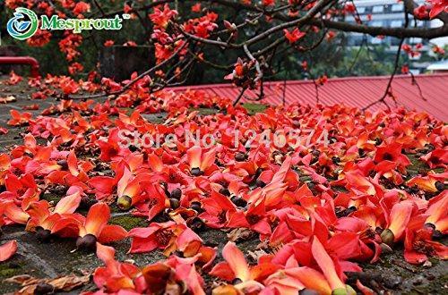 100Pcs Seeds / Sac arc-en-fleur de chrysanthème couleur nouvelle arrivée rare bricolage jardin fleur plante