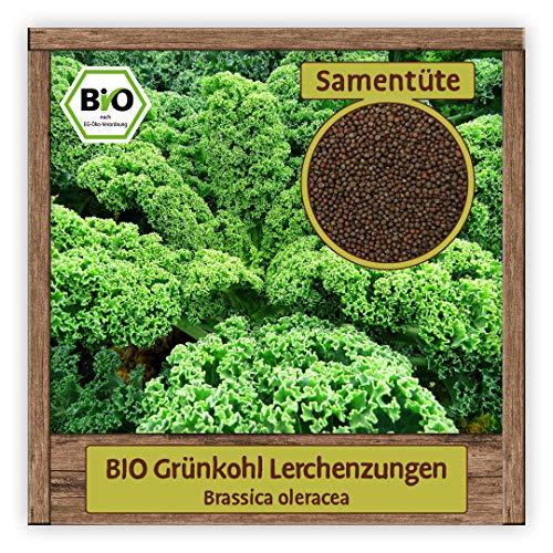 BIO Grünkohl Samen Sorte Lerchenzungen (Brassica oleracea) Gemüsesamen Federkohl Saatgut