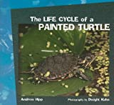The Life Cycle of a Painted Turtle (Focus on Science)