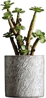 Qpzzy Europea olla de tejas de arcilla maceta de flores de imitación de piedra de cemento planta suculenta de interior planta de maceta cuadrada de la flor suculenta exterior florero conveniente for e