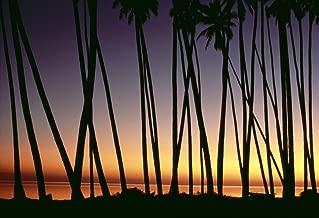 Posterazzi Hawaii Molokai Kapuaiwa Coconut Grove Palm Tree Trunks Silhouetted At Sunset Ocean Background Orange Yellow A29E Poster Print (36 x 24)
