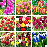 Tulip Bulbs Mixed,Attractive Flowers,Can Be Planted in Flower Beds,Vitality Release,Special Rare Gifts-15 Tulip Bulbs