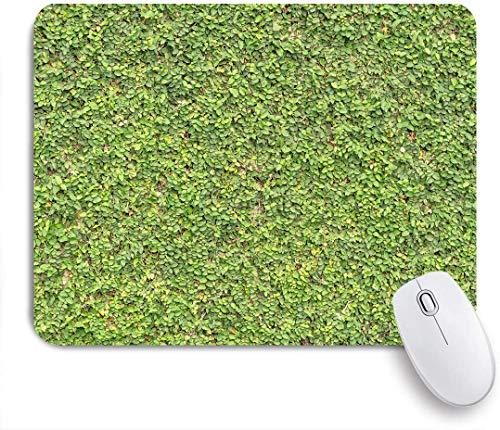 SUHOM Gaming Mouse Pad Rutschfeste,Buchsbaumhecke Gedeihendes Laub Erwachende Natur Frühling verlässt Busch Strauch Verdure Erfrischendes Grün,für Computer Laptop Office Desk,240 x 200mm