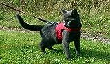 Mynwood Cat Jacket Harnais pour chaton rouge jusqu'à 8 mois – Anti-fuite.
