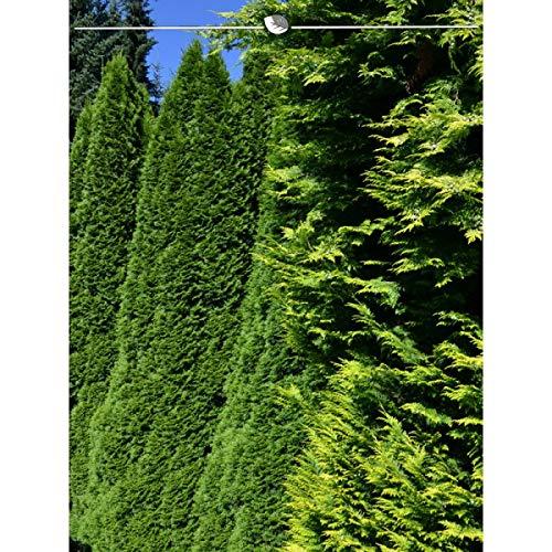 Lebensbaum Thuja Smaragd 120-140 cm. Angebot: 30 Lebensbäume. Thuja occidentalis Smaragd Konifere. Winterhart und Pflegeleicht. Immergrüne Heckenpflanzen. Blickdichte Thuja Hecke | Inkl. Lieferung